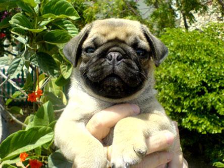 Pup puppy 01