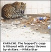 the poor leopard