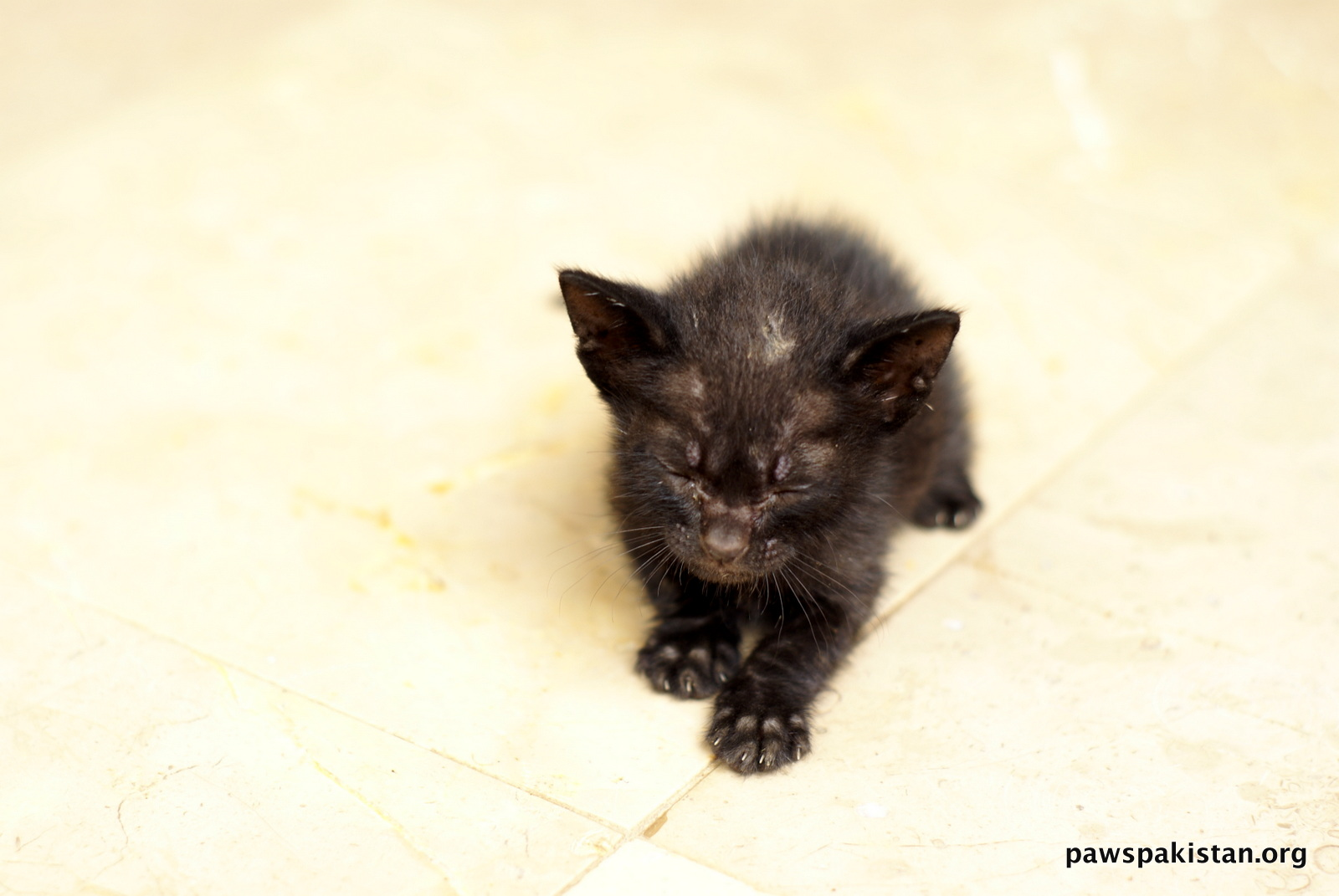Abandoned Kittens need foster mother