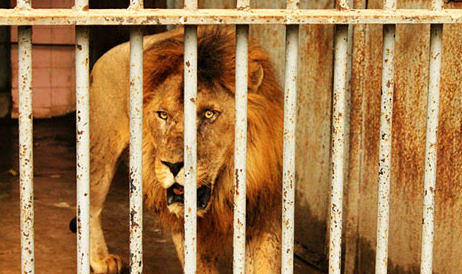 Dejection at the Karachi Zoo