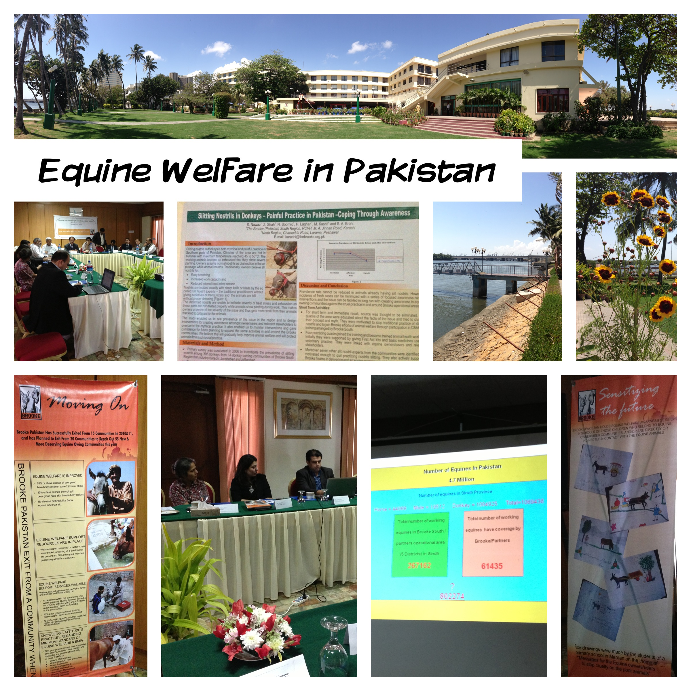Equine Welfare in Pakistan