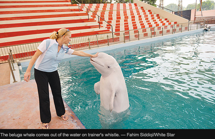 Captive whales and dolphins in Karachi