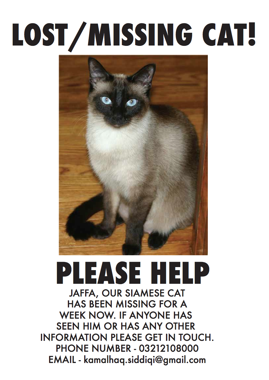 Help find Jaffa the missing Siamese cat