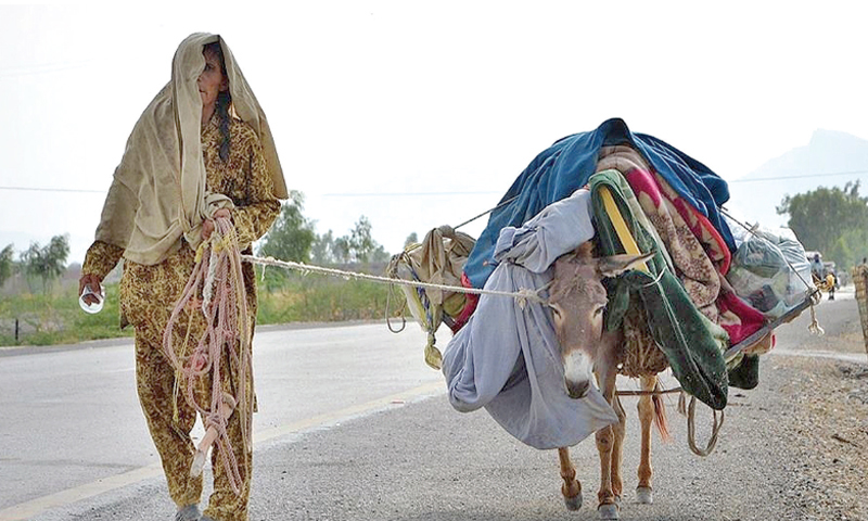 Displaced people, animals suffer alike