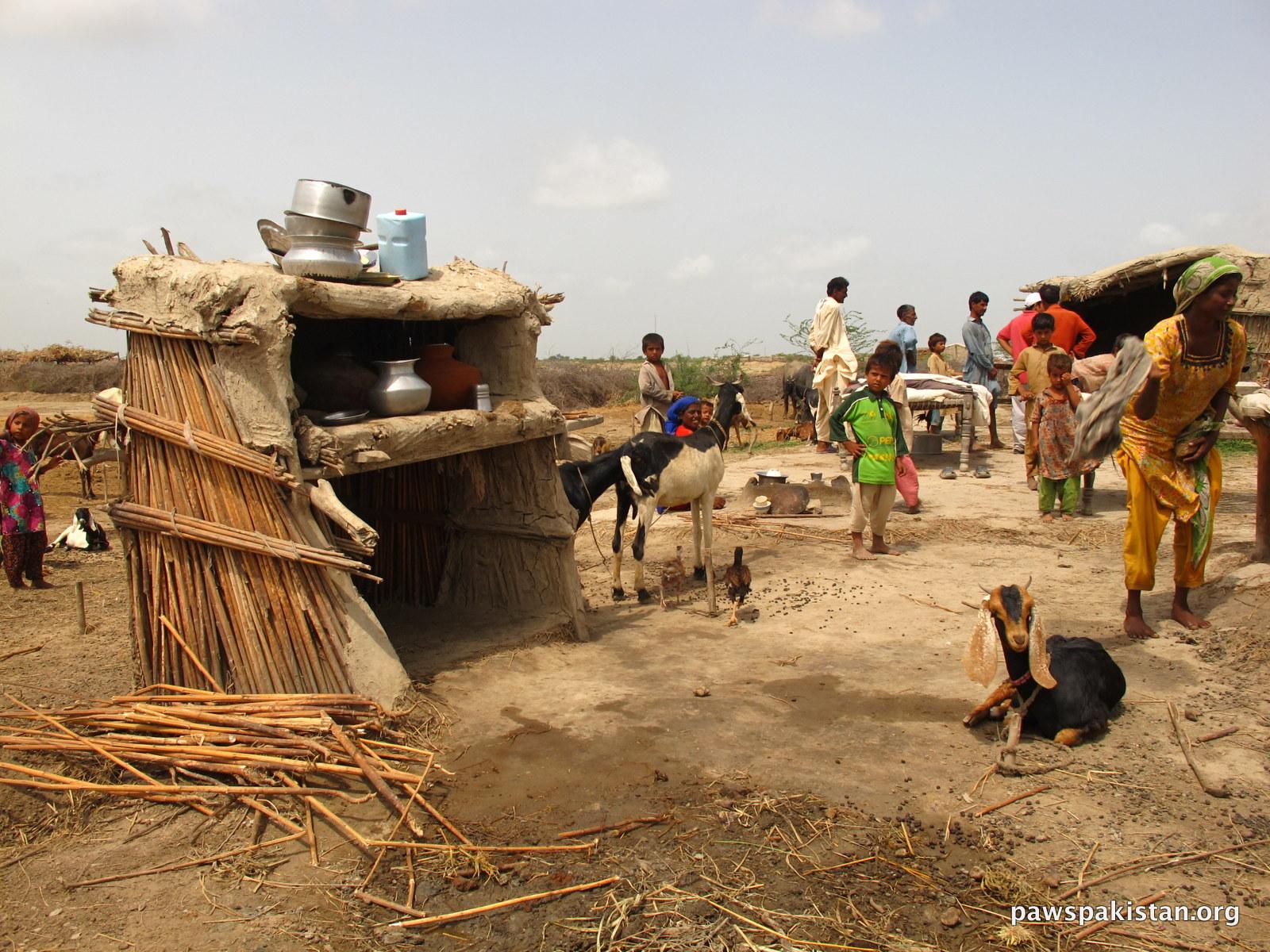 Livestock for Livelihood