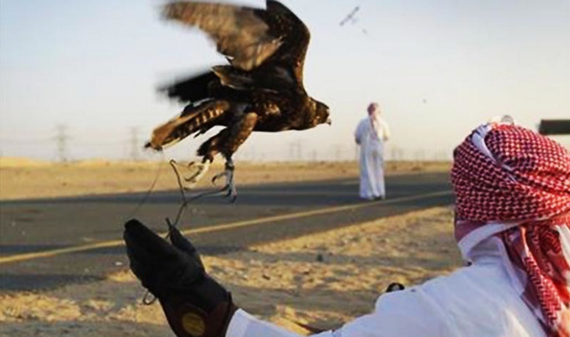 29 permits issued to Gulf states royal families for houbara bustard hunting