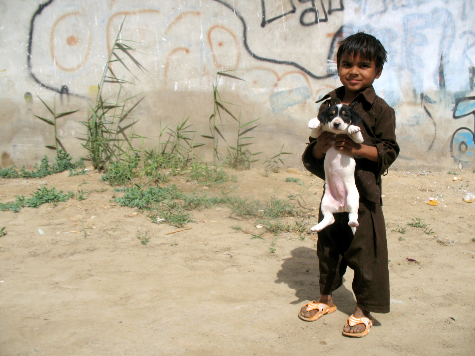 Humane solutions – stray dog management for Pakistan