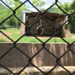 Kaavan the Islamabad Zoo elephant