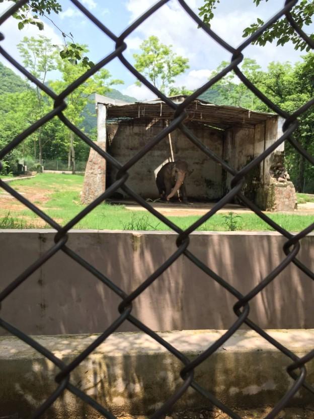 Kaavan the Islamabad Zoo elephant