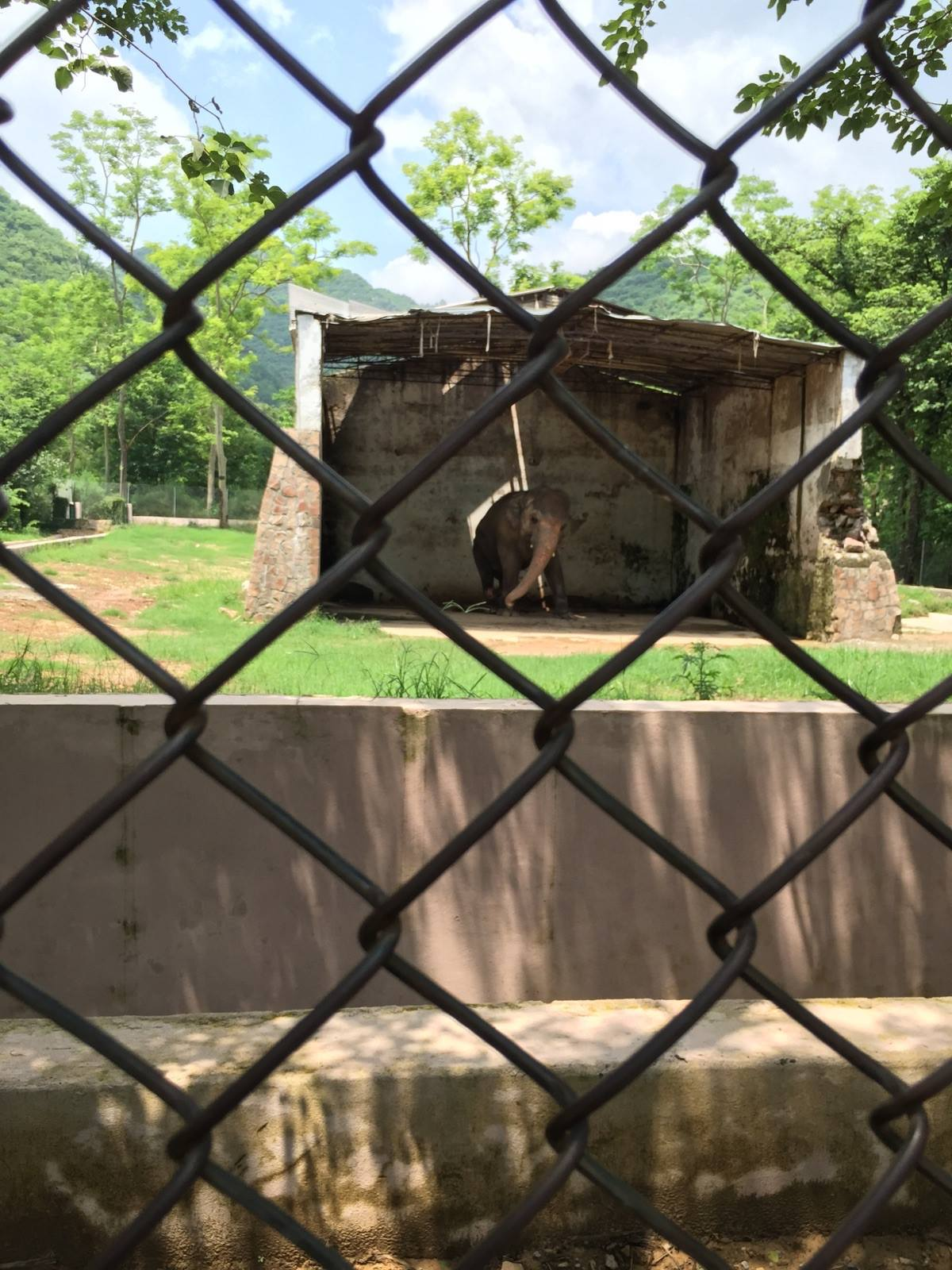 Free Kaavan, the Islamabad Zoo elephant