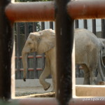 Karachi Zoo elephants Oct2015