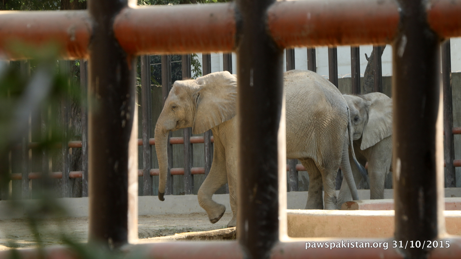 Elephants – from cells to sanctuaries