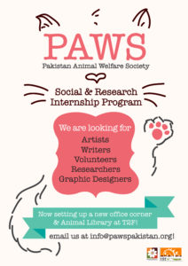 Internship and Volunteer Opportunities at PAWS