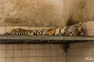 AnimalCruelty-12 (1)