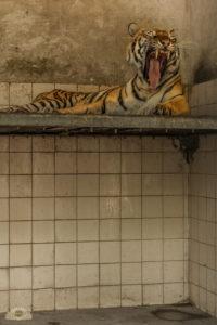 AnimalCruelty-13