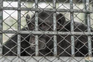 AnimalCruelty-16