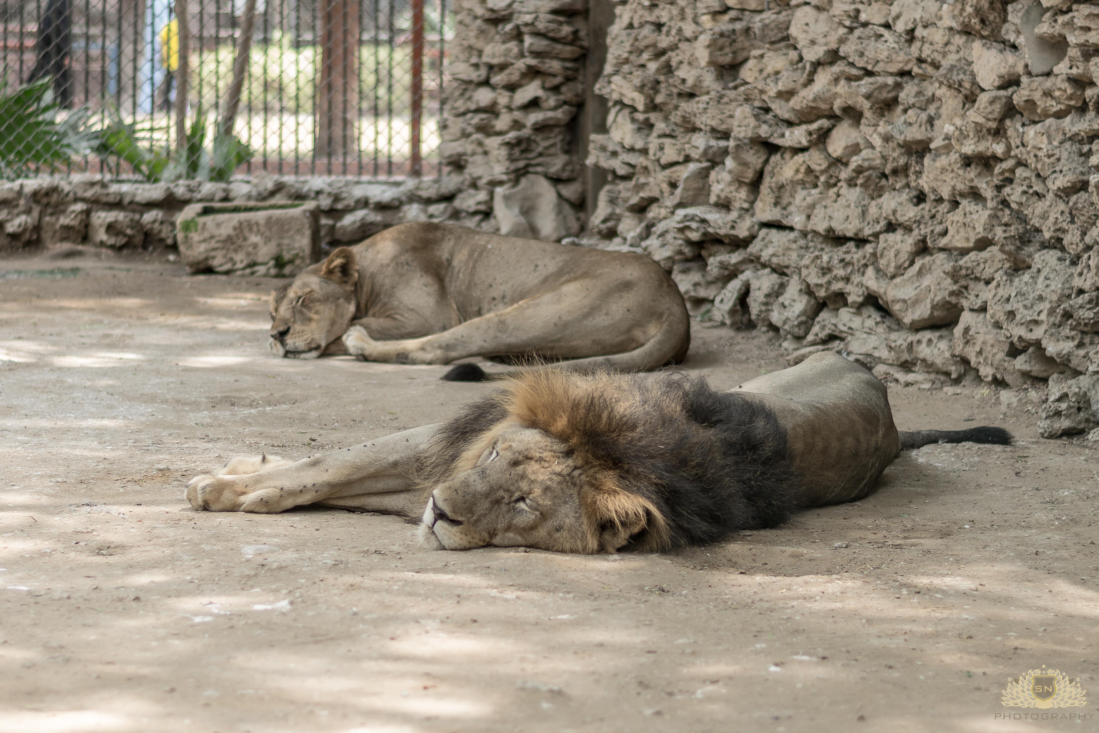 AnimalCruelty 17