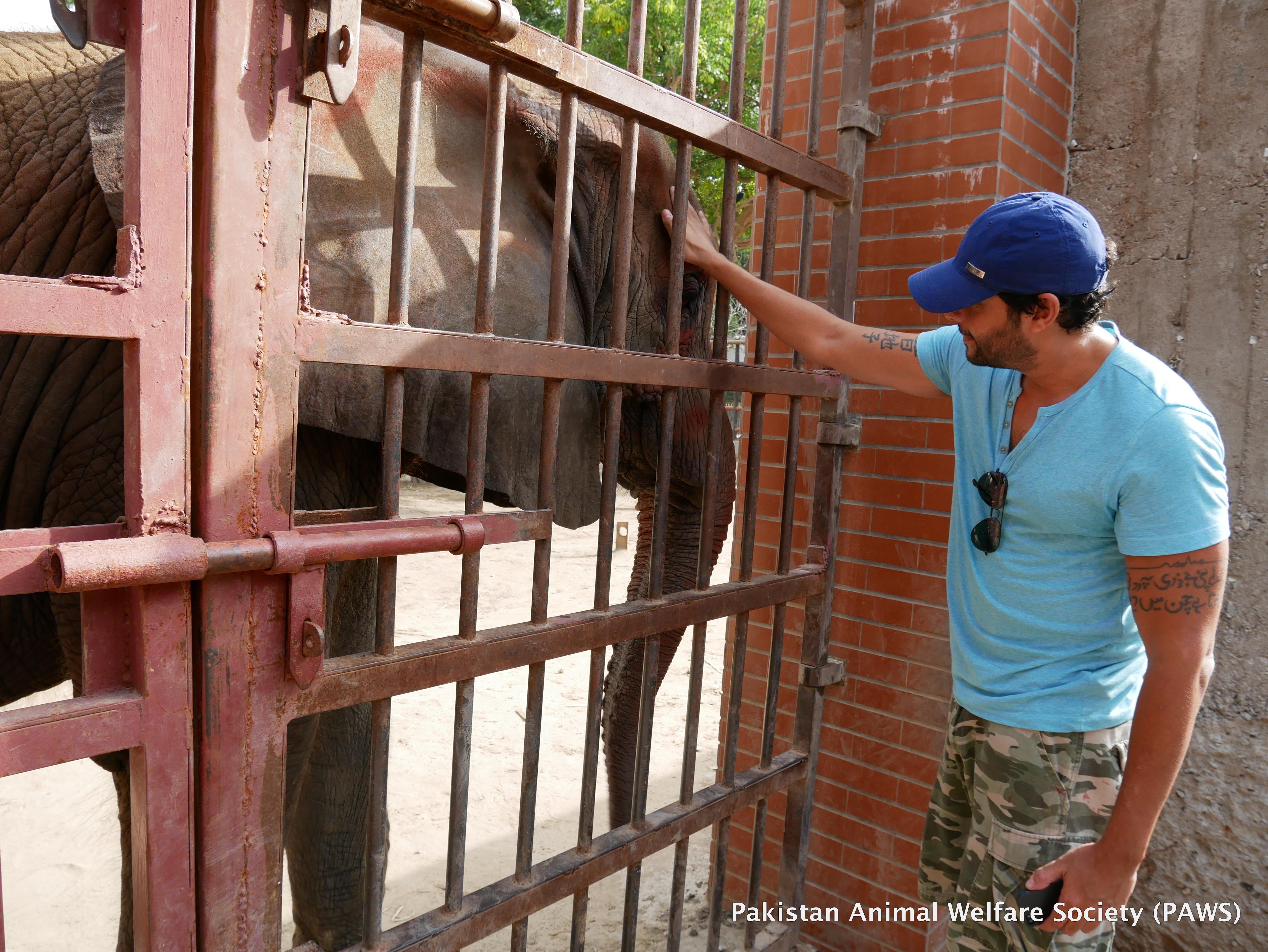 World Elephant Day at Karachi Zoo